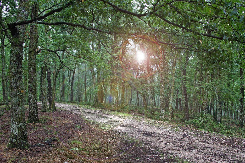 Foto della foresta umbra for Pianta della foresta di pioppo