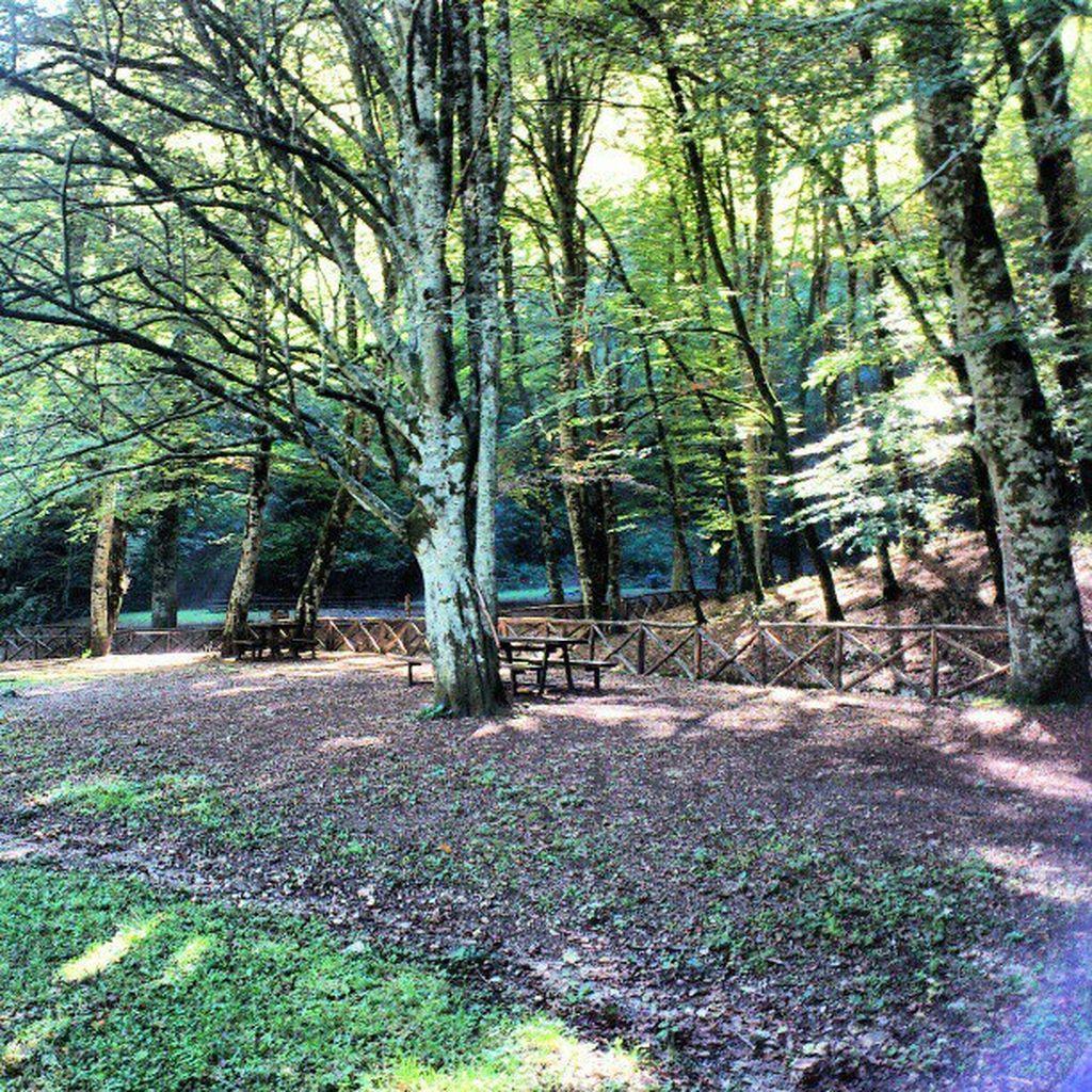 Foto della foresta umbra for Cabine della foresta lacustre