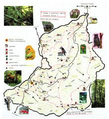 La mappa della foresta umbra for Pianta della foresta di pioppo