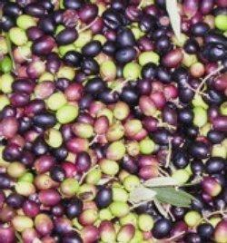 Olio extravergine prodotto da olive selezionate