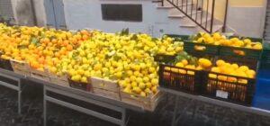 Vico del Gargano sulle colline del Gargano: agrumi e tradizione il giorno di San Valentino