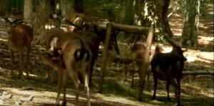 Tour di 3 giorni a Vieste e per il Gargano: foresta Umbra con daini