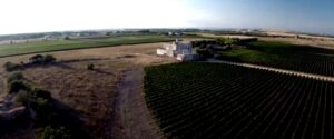 Vigneti di vini rossi e bianchi di Puglia